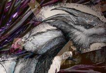 ARK Extinction Dossier Thorn