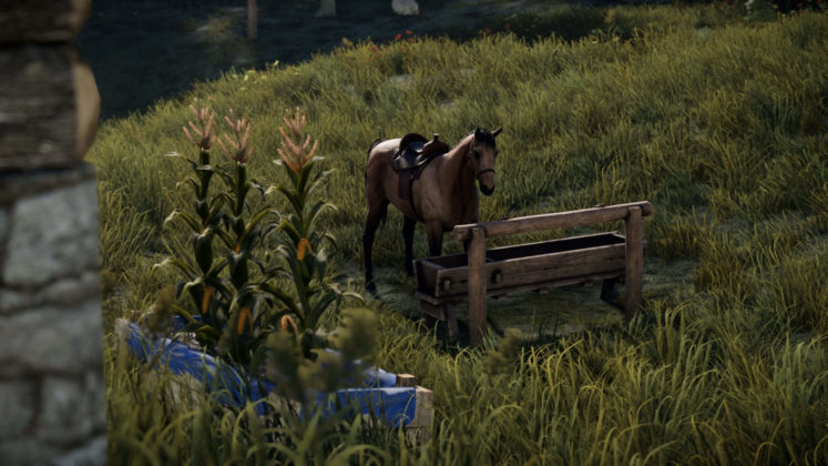 Rust Juli-Update Pferde