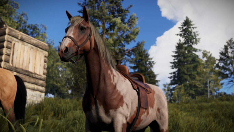 Rust Juli-Update Pferderassen